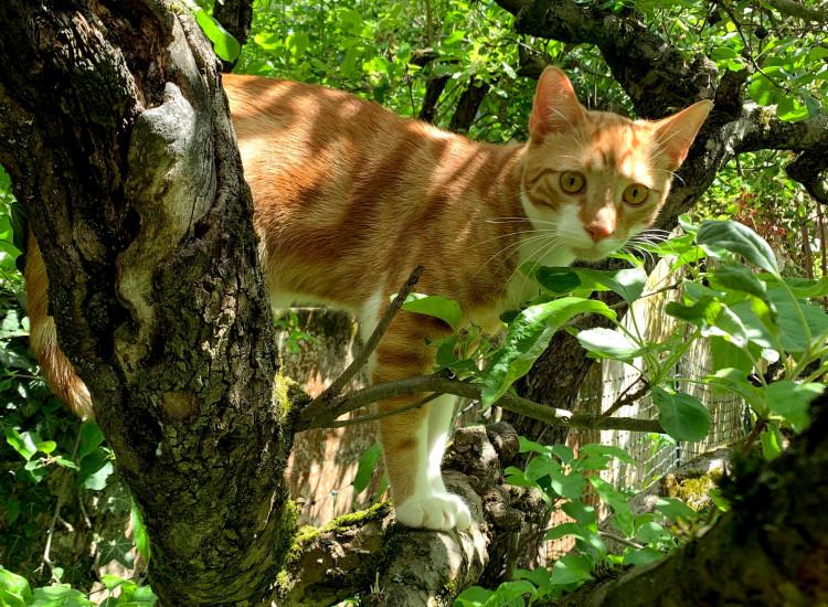 Im Baum am Nachbargrundstück