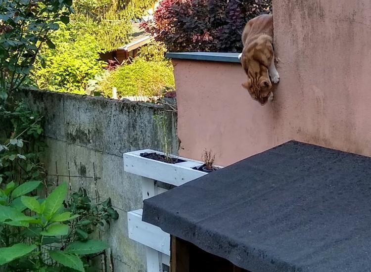 Fritz auf der Mauer
